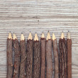 Tree trunk pencils — Stock Photo