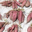 Sweet potato harvesting — Stock Photo
