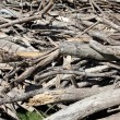 Many old waste wood — Stock Photo