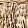 Closeup of rice paddy straw — Stock Photo #33944363