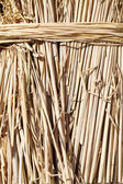 Closeup of rice paddy straw — Stock Photo