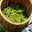 Harvesting green tea leaves — Stockfoto