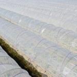 Plastyczna szklarnia — Zdjęcie stockowe #38365605