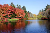 Autumn colour of pond — Stock Photo