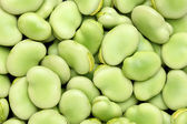 Broad beans — Foto de Stock