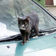 Cat on the green car — Stock Photo
