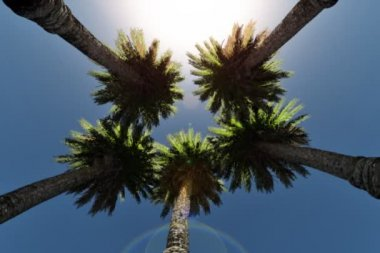 Date Palm Trees and sun shining, low angle — Stock Video