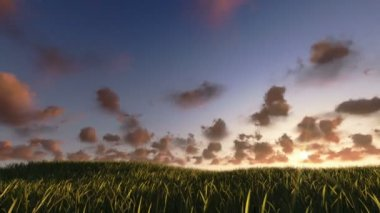 Flying above grass sunrise timelapse, night to day — Stock Video
