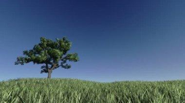 árbol solitario en un prado verde contra el cielo azul — Vídeo de stock