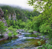 Summer wild landscape with a river. — Stock Photo