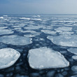 Ice on the sea to the horizon. — Stock Photo