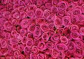 Hintergrund der blumen-rosen. — Stockfoto