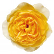 Yellow Rose with Path Isolated — Stock Photo #14879637
