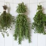 Fresh Herbs Hanging — Stock Photo #25828797