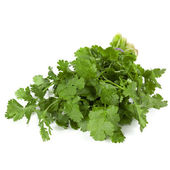 Cilantro Isolated — Stock Photo