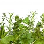 Herb Border over White — Stock Photo