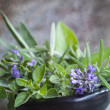 Bowl of Fresh Herbs with Grunge Effects — Stock Photo