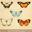 Collection of beautiful butterflies. — Stock Vector #36720951