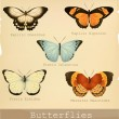 Collection of beautiful butterflies. — Stock Vector