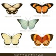 Collection of beautiful butterflies — Stock Vector