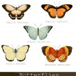 Collection of beautiful butterflies — Stock Vector #36721105