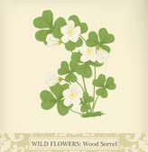 Wood Sorrel, Wild flower. Beautiful vintage colors — Stock Vector