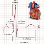 Human heart normal sinus rhythm and heart anatomy — Stock Vector