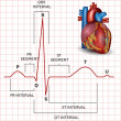 Humheart normal sinus rhythm and heart anatomy — Vetorial Stock #40157505