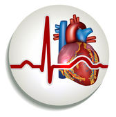 Human heart rhythm icon — Stock Vector
