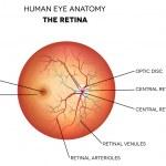 Постер, плакат: Human eye anatomy retina