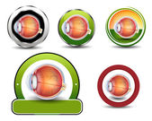 Ophthalmology symbols collection, Human eye cross section. — Stock Vector