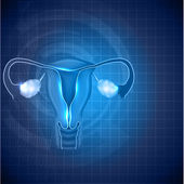 Female reproductive system background, uterus and ovaries — Stock Vector