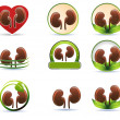 Huge set of kidneys icons — Stock Vector #44146411