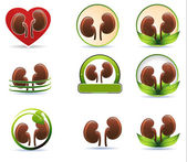 Huge set of kidneys icons — Stock Vector