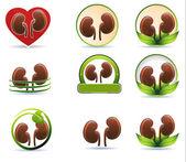 Huge set of kidneys icons — Stock Vector