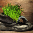 Green grass in grunge boot — Stock Photo