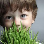 Boy with grass, studio shot — Stock Photo