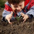 Sprout in children hand — Stock Photo #34718747