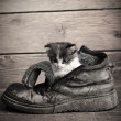 Young kitten in old boot — Stock Photo