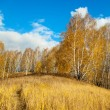 Autumn landscape — Stock Photo #35908635