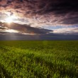 Stock Photo: Spring landscape HDR edit