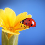 Ladybug — Stock Photo #39951707