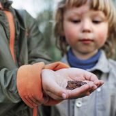 Children see a toad found in the forest — Stock Photo