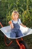 Happy boy with a tomato garden in a wheelbarrow — Stock Photo