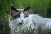 Cat in grass — Stockfoto