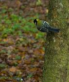 Tit bird on a tree — Stock Photo