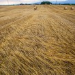 Wheat Bale and Storm Clouds — Stock Photo #14060829