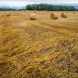 Wheat Bale and Storm Clouds — Stock Photo #14062132