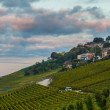 Lavaux, Switzerland - Vineyard Terraces - Stock Photo