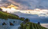 熔丝,瑞士-葡萄园梯田 — 图库照片